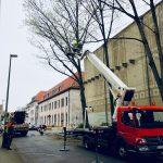 Bunker Kaiserstraße 30 - Baumfällarbeiten